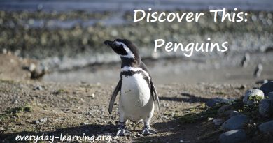 Discover This Penguins