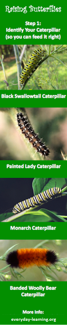 Identifying Caterpillars