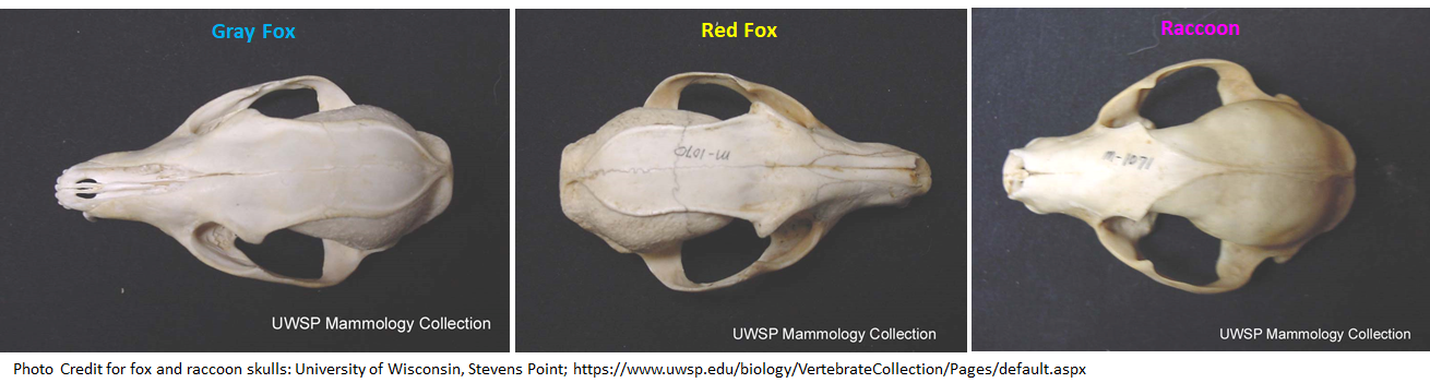 Discover This: Skull Identification