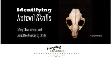 Identify animal skulls